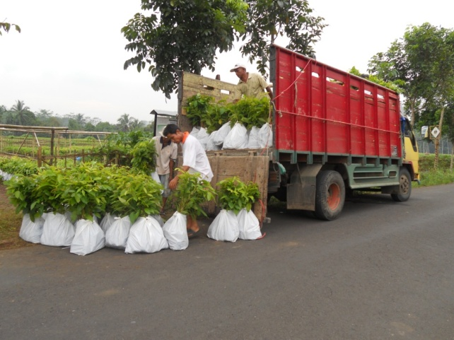 Loading of seeds from the nursery onto the truck then transported to the destination