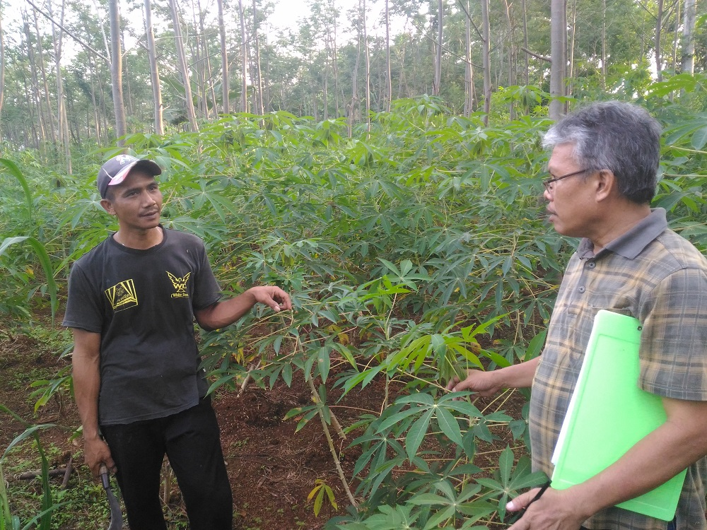 Field Visit with Farmers, ACIAR and T4T