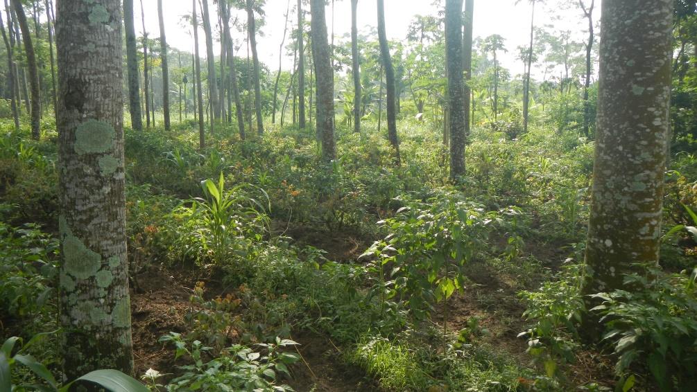 Crops planted by farmers in Boyolali