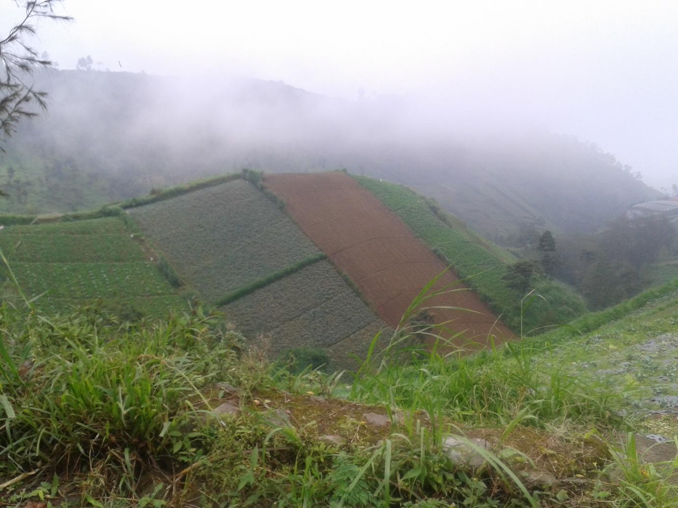 Slopes of Merbabu