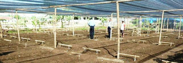 Final preparation of a purpose built, shaded nursery is overseen by Trees4Trees staff prior to seedling production.
