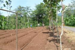 Newly established nursery of Albizia seedlings in FMU of Pati