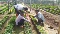 T4T Forestry Team Taking Care The Seedlings
