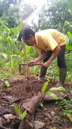 Trees Planting Season