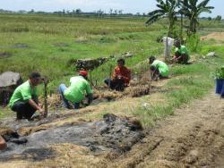 Planting 1000 Mahogany
