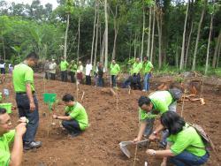 Reforestation in Gondoriyo