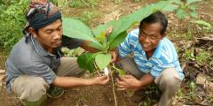 Farmer with his new Teak tree