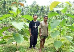 Community forester with healthy young Teak trees